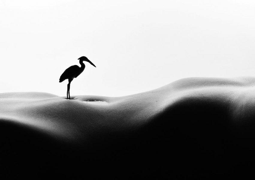 island south hotel-Allan Teger-Heron